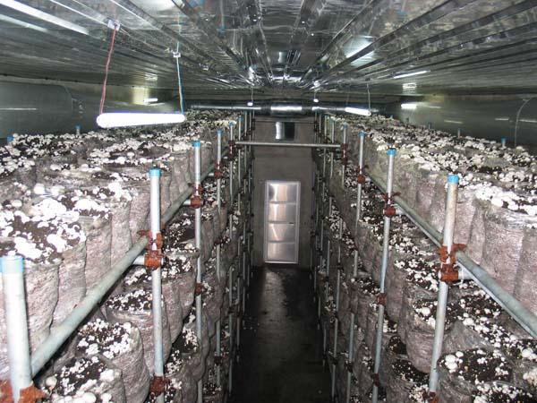 بازاریابی شرکت پرورش قارچ خوراکی