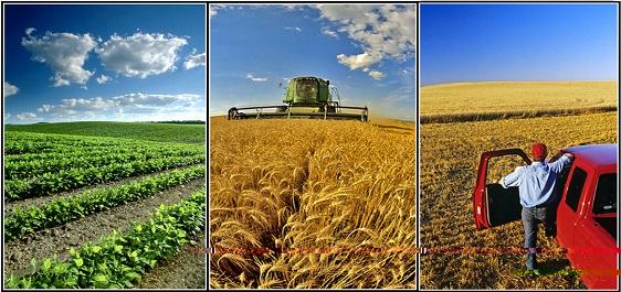 توسعه کشاورزی در پیشرفت صنعتی