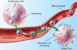 اهمیت هورمون ها در دفاع علیه حشرات و بیماری ها