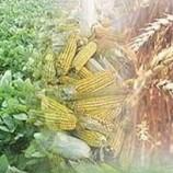 دانلود رایگان مقاله اقتصاد سهم ایران در تجارت بین الملل محصولات کشاورزی